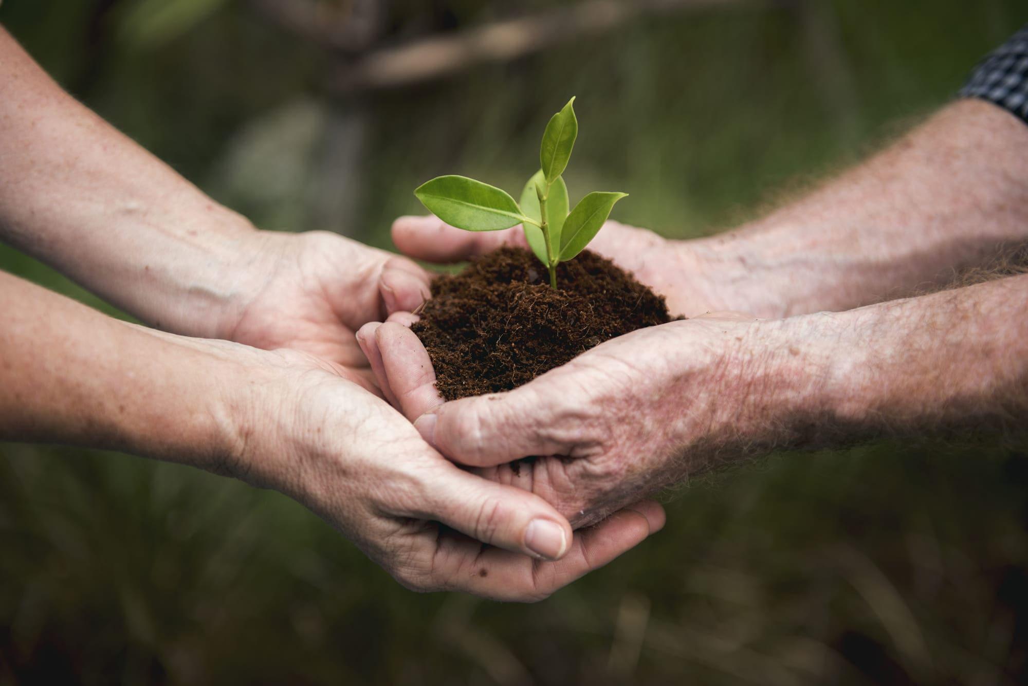 environmental-conservation-plant-sustainability-P9QCM9H (1)